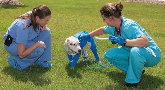 Vonn Shows Progress At The Veterinary Medical Teaching