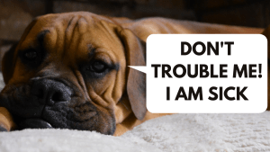 HOW TO KNOW THAT YOUR DOG IS SICK?