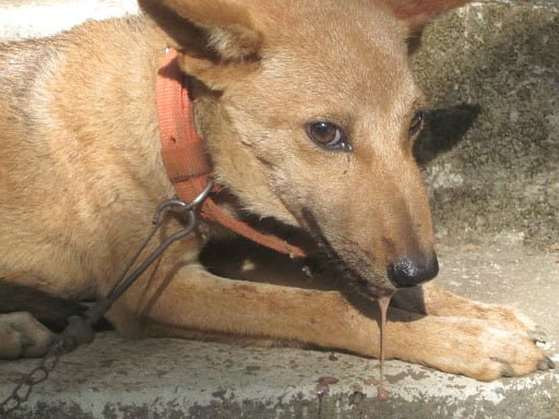 rabies in dog can cause death in your dog.