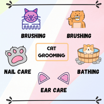 Cat grooming includes brushing and combing, nail care, ear care, brushing teeth and bathing