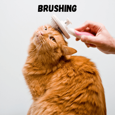 cats need brushing once a week