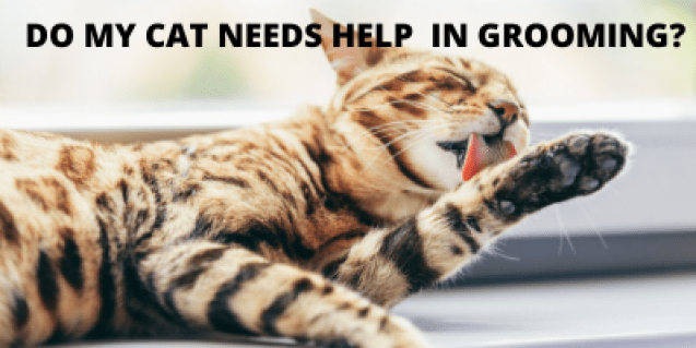 Do my cat need help in grooming as she already groom herself a lot? Yes, She do need your help.