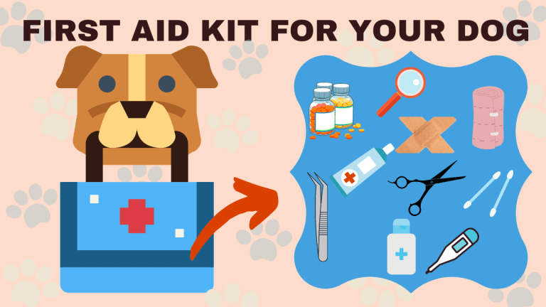 First aid kit for your dog