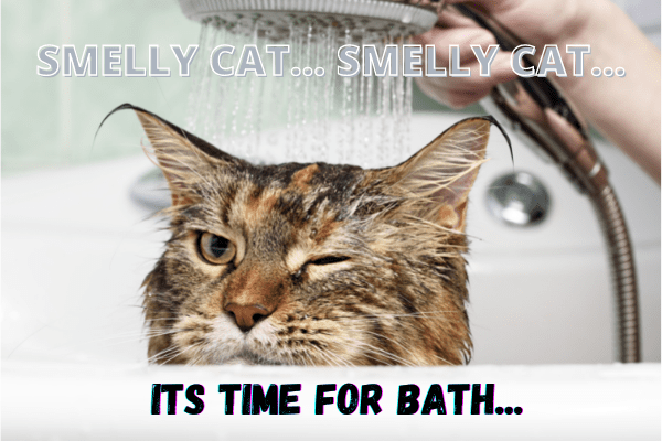 Does your cat start smelling? If your answer is yes then she need a bath.