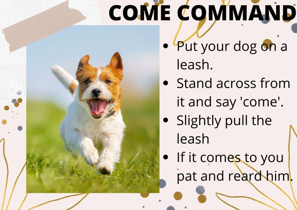 """Go down to his level and say, """"come"""", while gently pulling on the leash."""