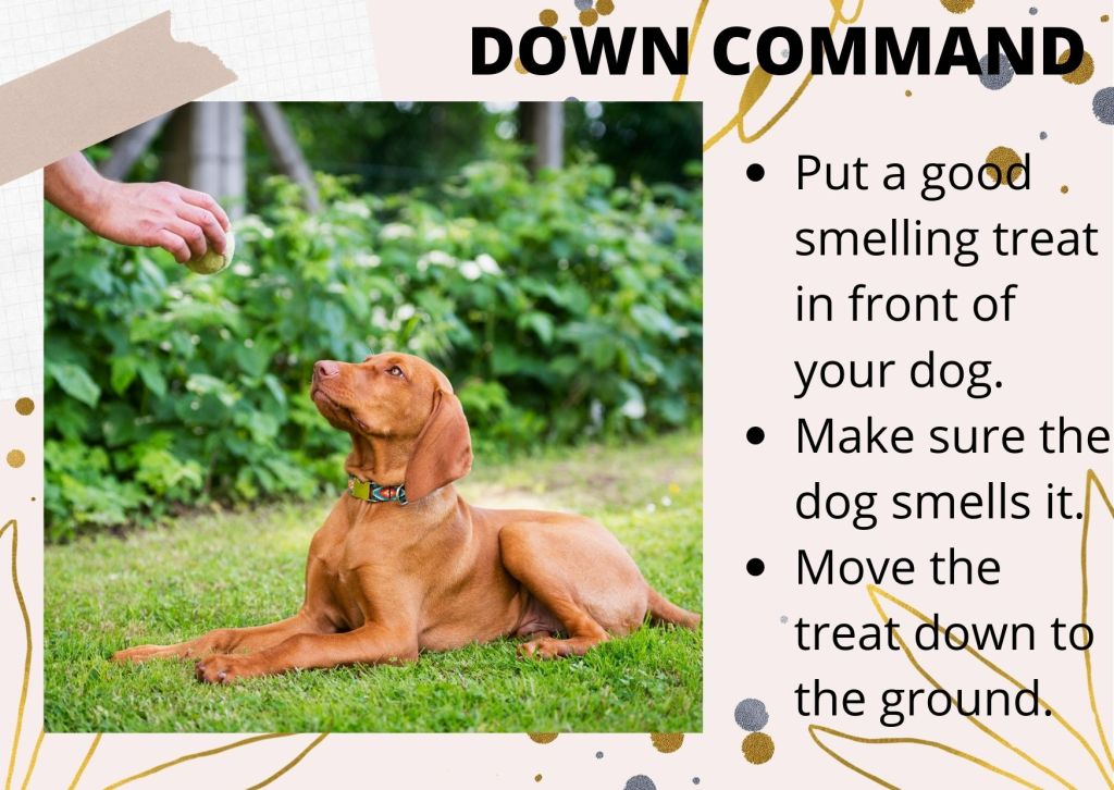 dog requires to be in submissive posture to learn this command