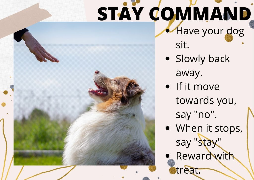 stay command helps in controlling your dog
