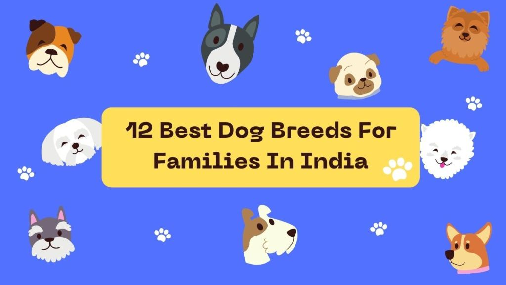 12-Best-Dog-Breeds-For-Families-In-India