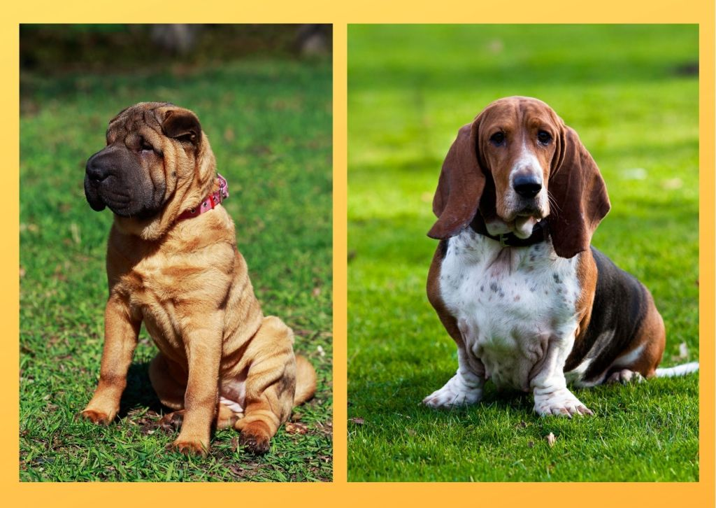 Dog breeds for busy singles can be left alone for longer period of time than other dogs.