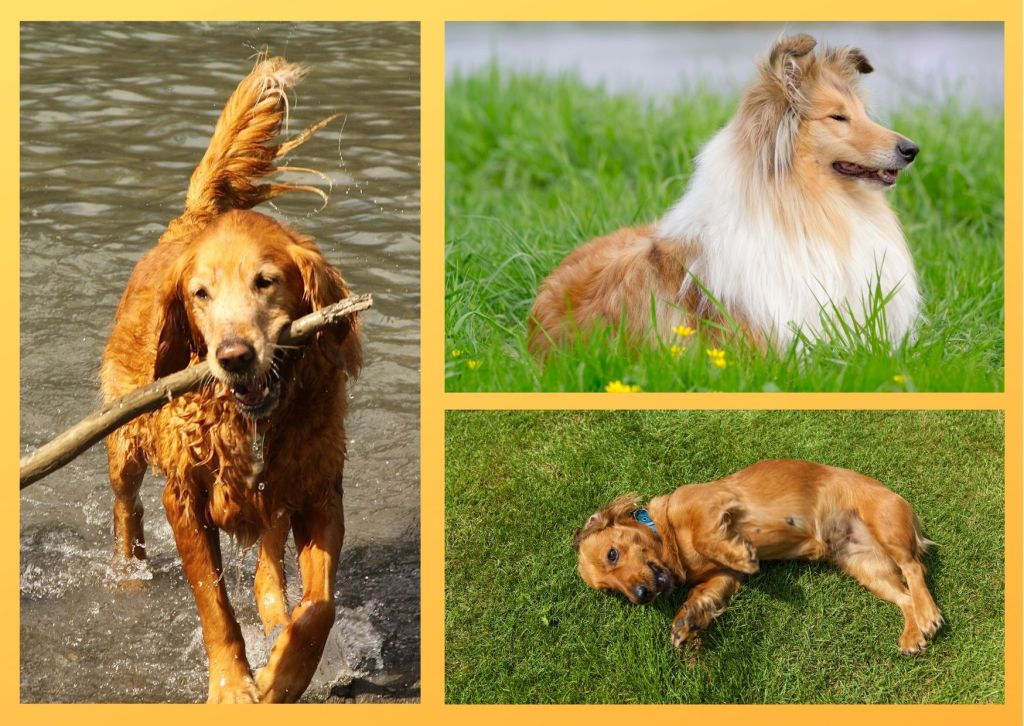 One must choose dog breeds carefully in a multi pet household as pets get involved in lethal fights.