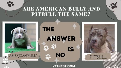 ARE AMERICAN BULLY AND PITBULL THE SAME