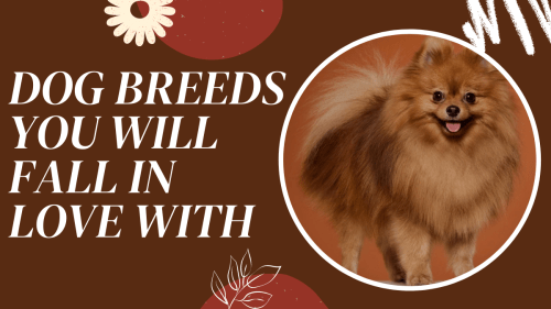 small size breeds of dogs in india