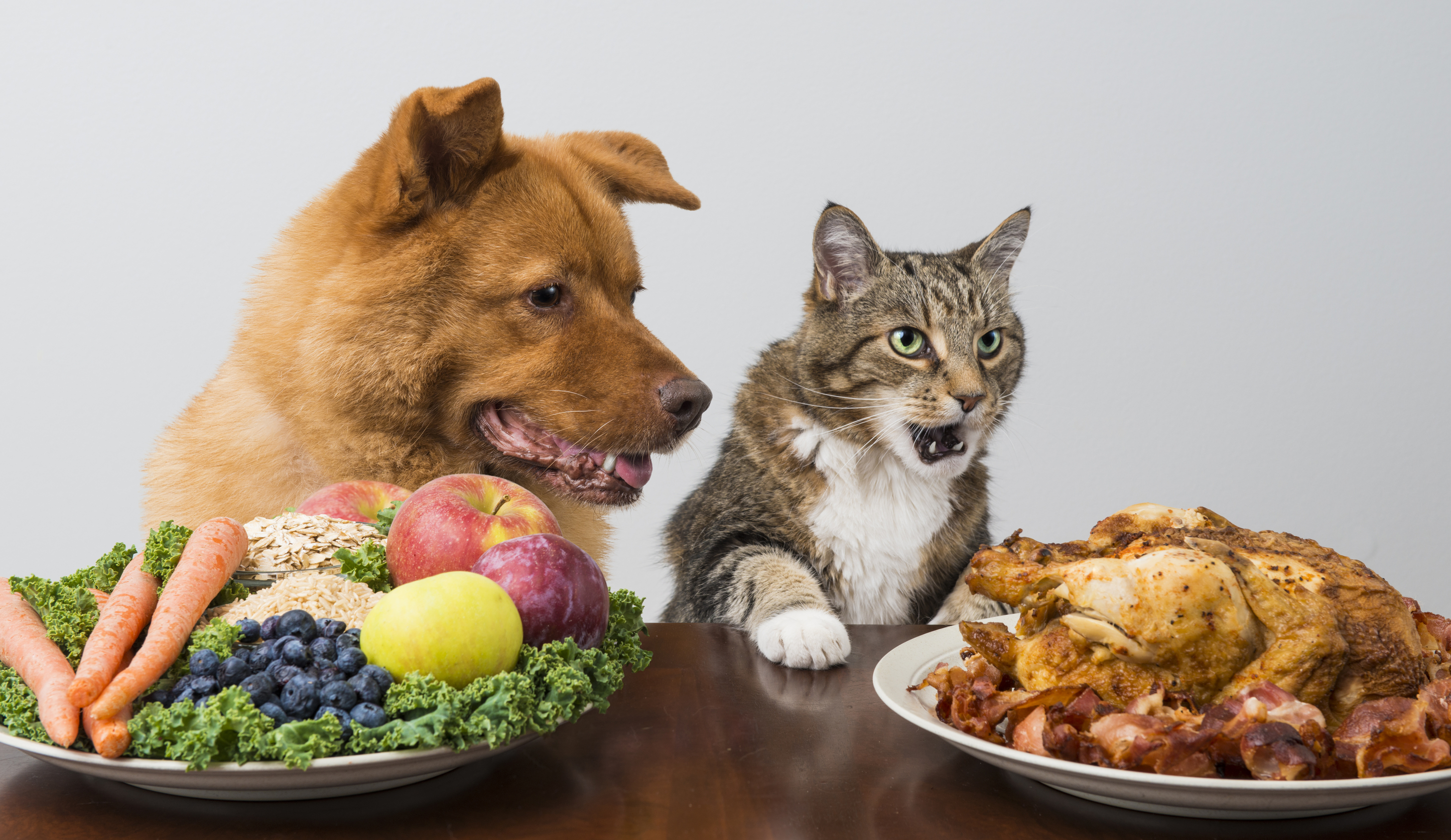 How Much Should I Feed My Dog Or Cat Clinical Nutrition