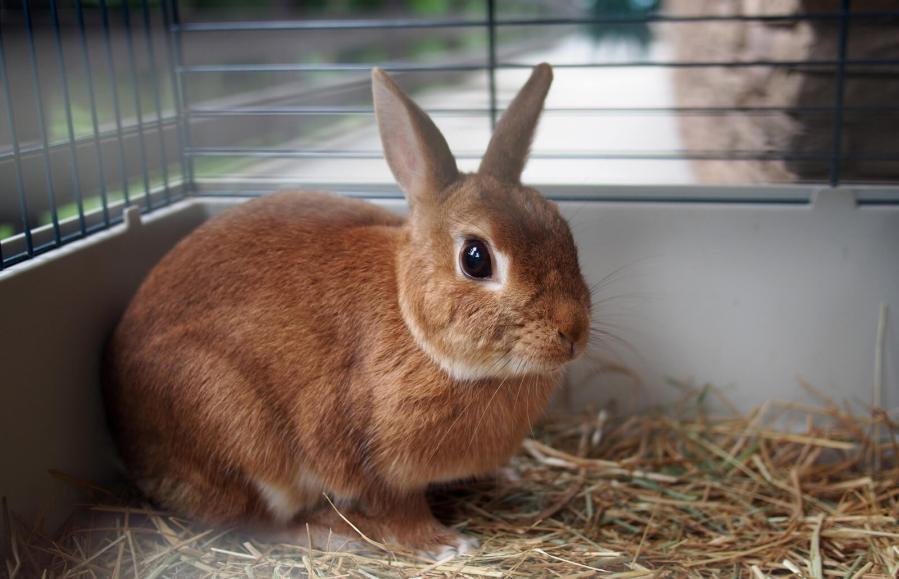 Cómo elegir una buena jaula para conejos