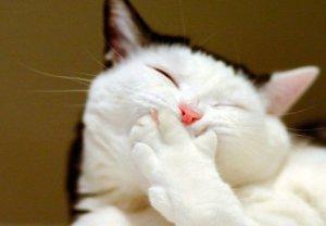Почему кошка кашляет как будто подавилась и что с этим делать