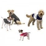 Thundershirt for Anxiety in Dogs
