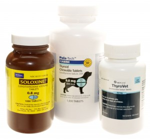 Popular Brands of Levothyroxine for Hypothyroidism in Dogs