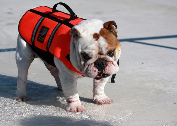 How to keep your dog cool in the summer heat