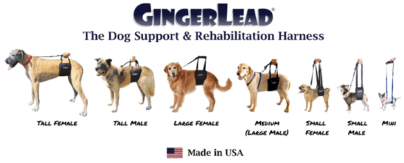 GingerLeads are Available in Wide Ranges of Sizes