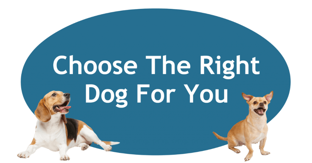 s A Dog Right For You?