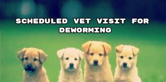 Scheduled Vet Visit for DeWorming