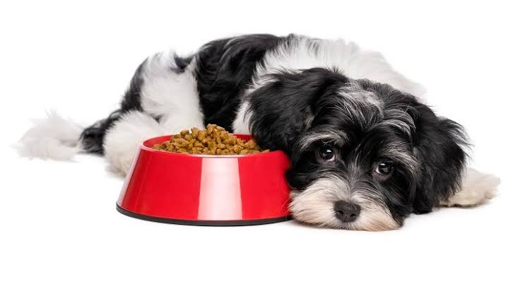 How To Deal With GASTRITIS In Dogs
