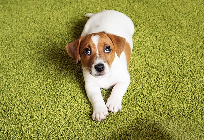 What Is Gastritis • How To Deal With GASTRITIS In Dogs
