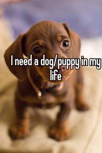 why i need a dog