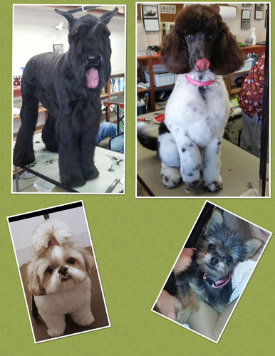 Our Groomer's Talents!