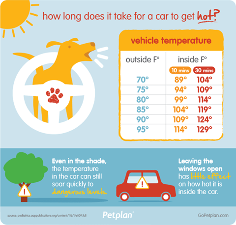 Don't Leave Pets in the Car