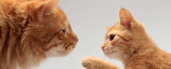 How Cats Communicate