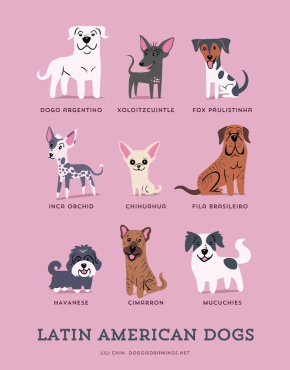 Latin American Dogs