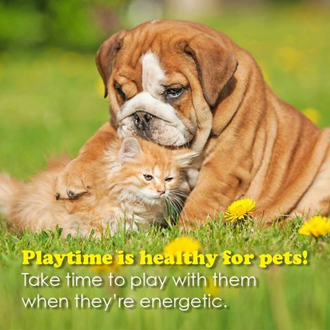 Playtime is Healthy!