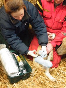 Adelle Isaacs, Farm vet with patient