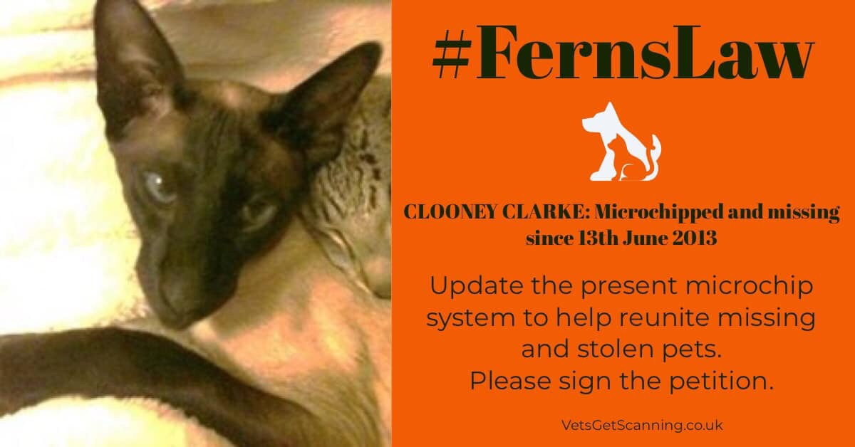 If #FernsLaw was implemented I could have Clooney back in my arms and our lives complete