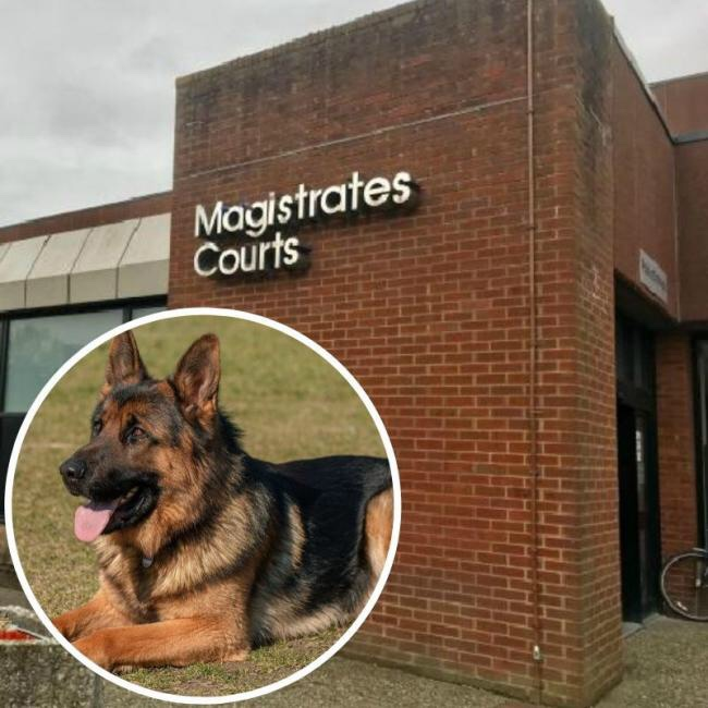 West Berkshire Man fined for failing to microchip dogs | Reading Chronicle