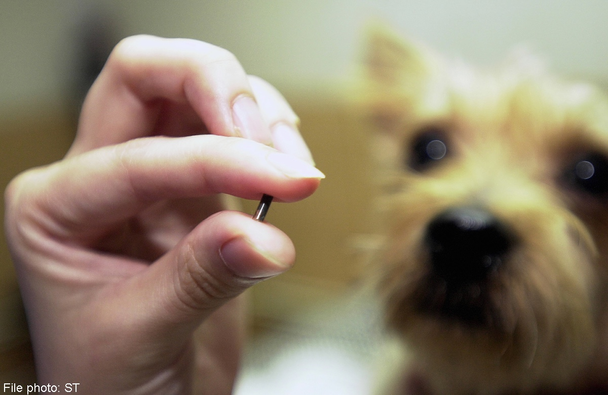 What have the Government petitions #FernsLaw, #TuksLaw, #GizmosLegacy and #HarveysLaw got in common? They all show the flaws in the microchip system!