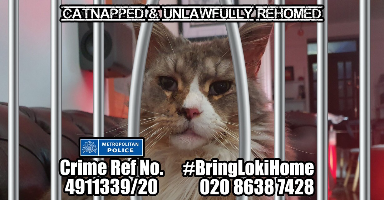 # BringLokiHome: My cat was stolen and unlawfully rehomed in only a week! #FernsLaw #PetTheftReform