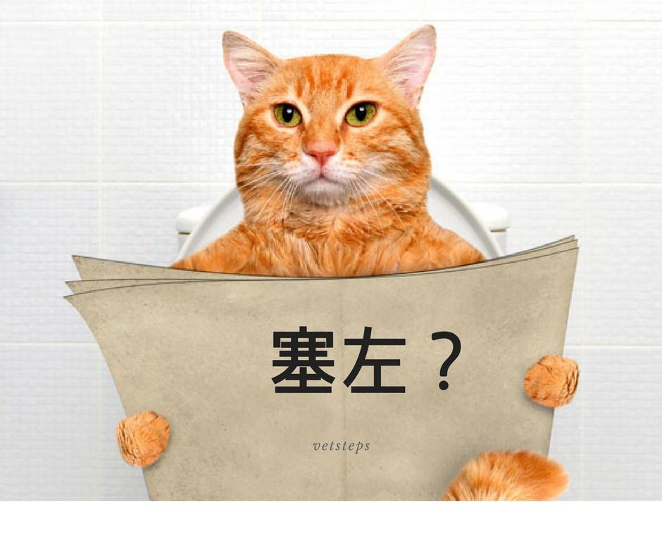 #Vetsteps貓狗營養篇:#07 貓奴注意!如何從食物入手避免膀胱石?】 – Vetsteps