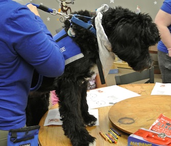 Tybee, a 3-year-old Portuguese Water Dog, can be silly and energetic or calm and docile.