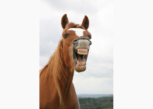 Image of: Gif Vetstreetcom 11 Unforgettable Animal Smiles