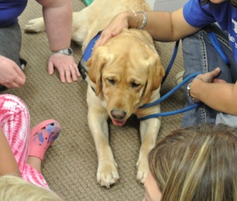Jolene, a 2-year-old yellow Lab, was specially bred to do therapy work.
