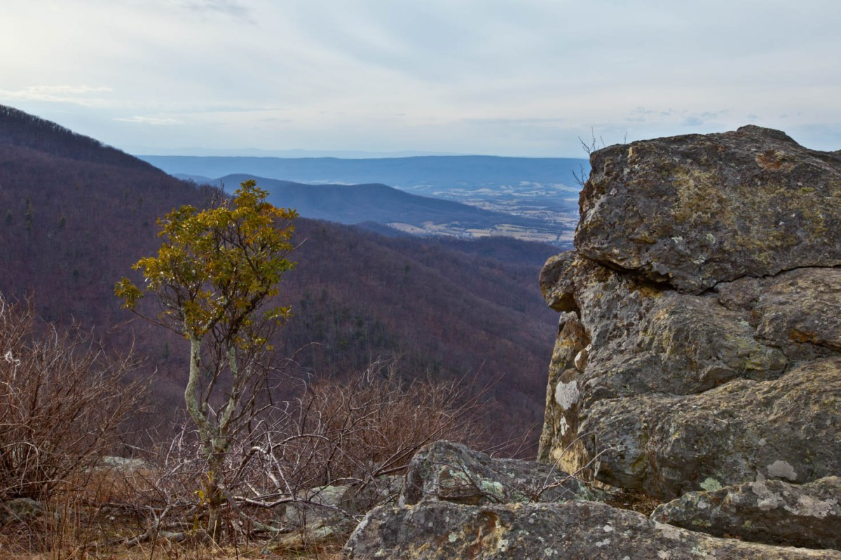 Skyline Drive, Shenandoah National Park, Blue Ridge Mountains, Virginia #vezzaniphotography