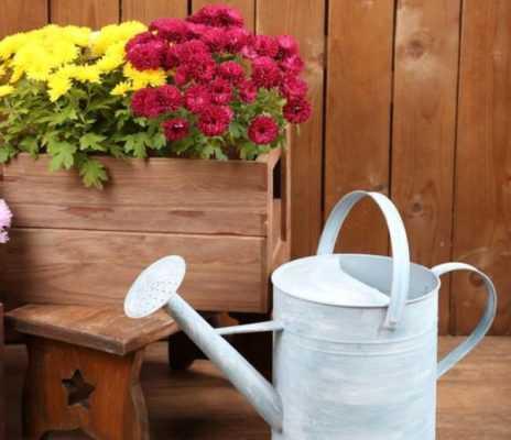 Хризантема белая кустовая – Кустовые хризантемы: фото ...