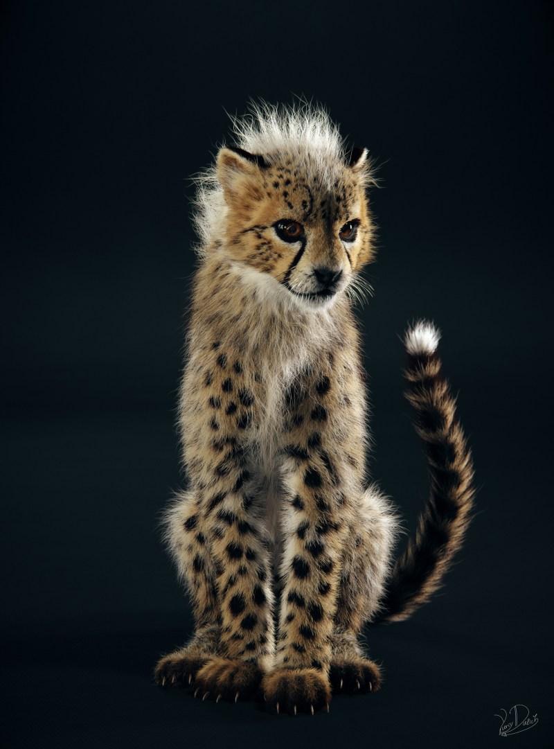 baby-cheetah_Image-courtesy-of-Yuriy-Dulich