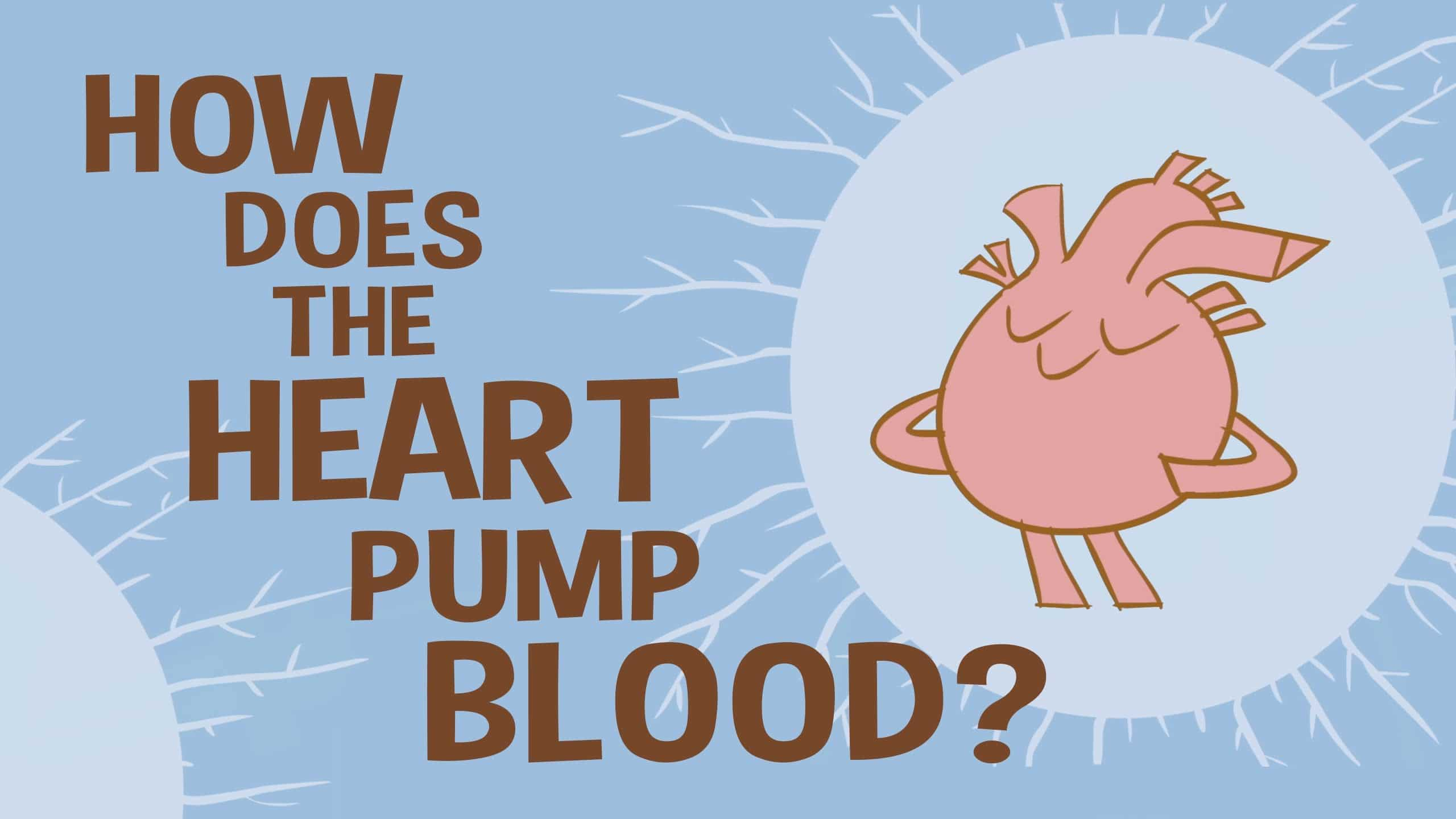 How Does The Heart Pump Blood Ted Ed