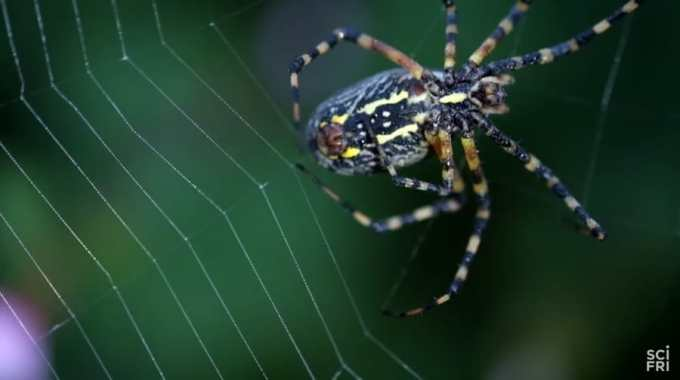 weaving and orb web