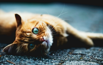 quit-pussy-footing-i-need-rapidbac-vet-blog