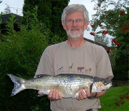Multe august 2006