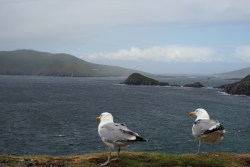 View to the Blasket Island, Dingle Peninsula